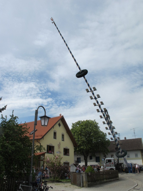 maibaum being put up