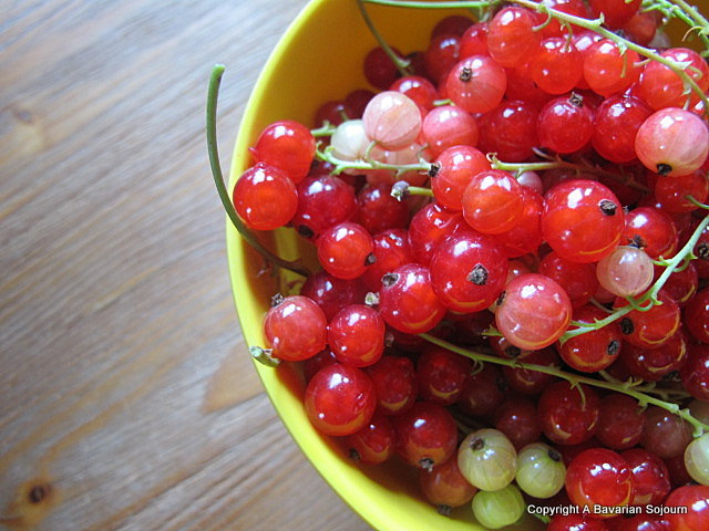 Back to Berries – Red Currant Jelly…