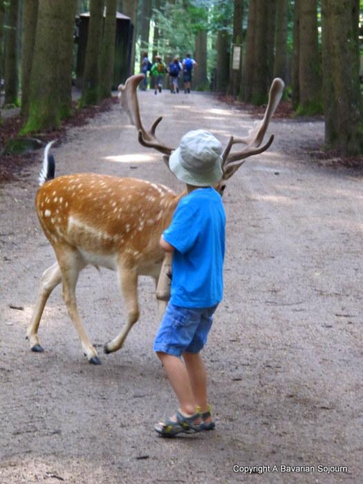Poing Deer