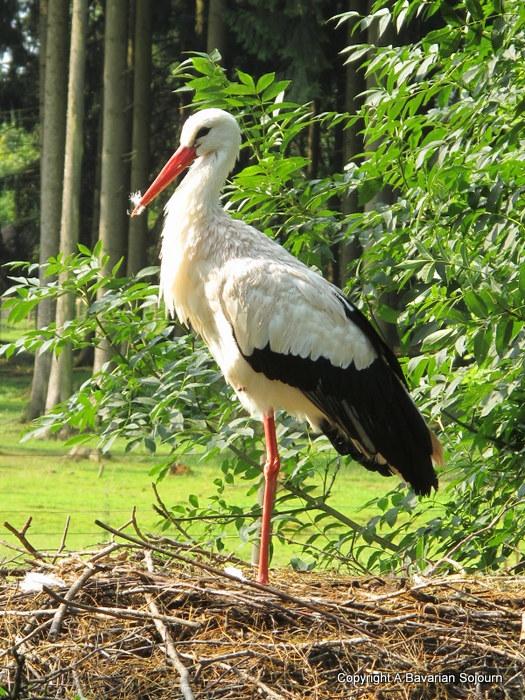 Stork Poing