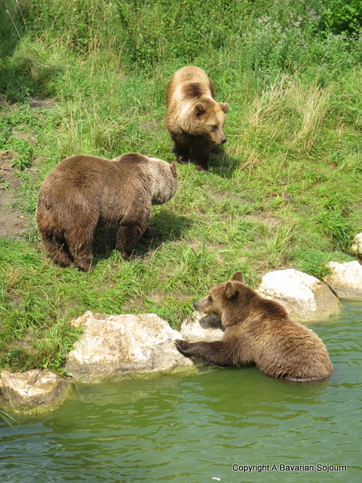 bears at Poing
