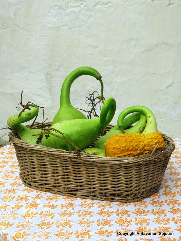 bavarian gourds