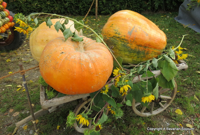 giant pumpkins bavaria