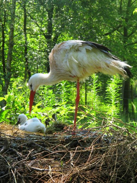 Storks R Us