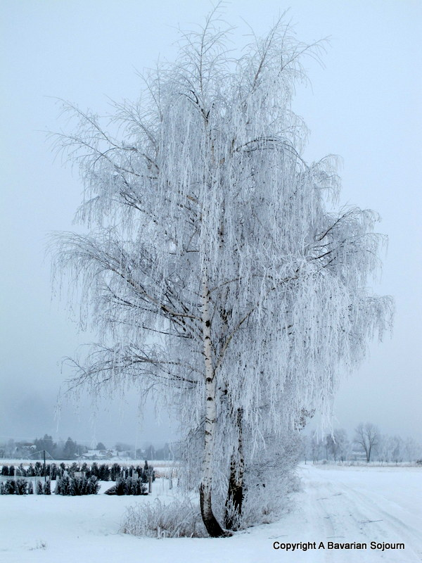 Sunday Photo – Ice Trees