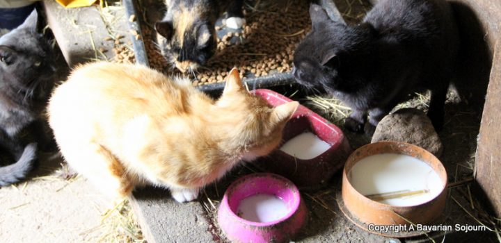 kittens hilserhof