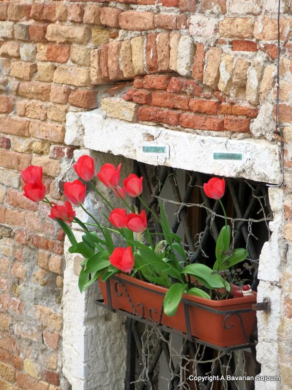 urban tulips