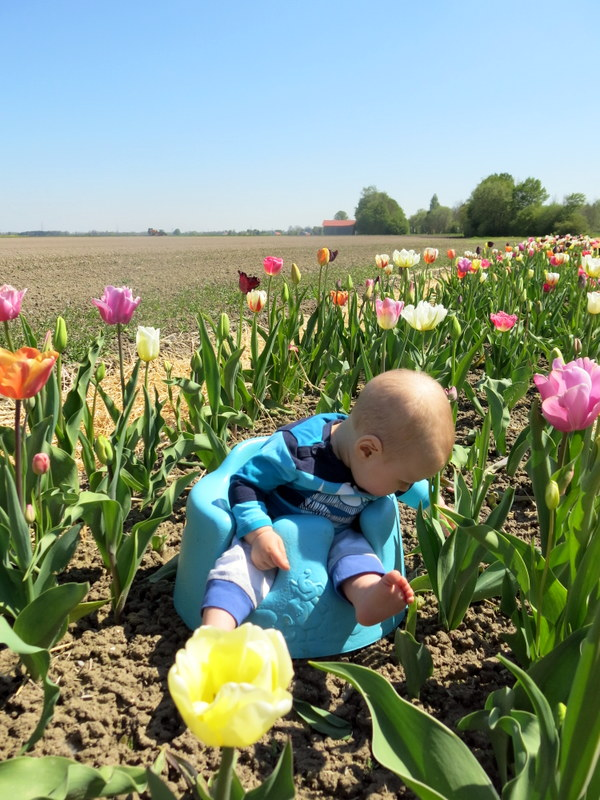 tulip baby