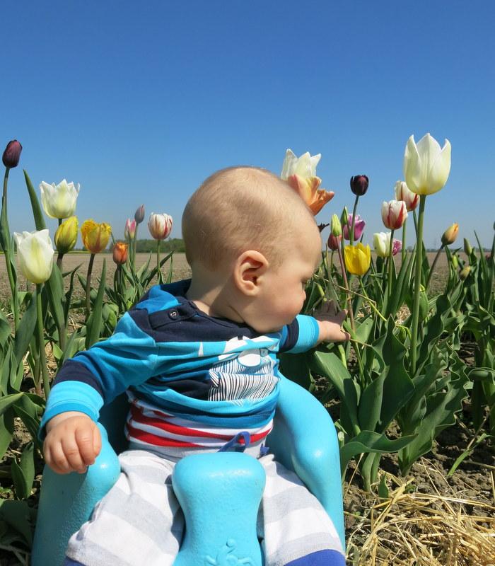 baby in tulips