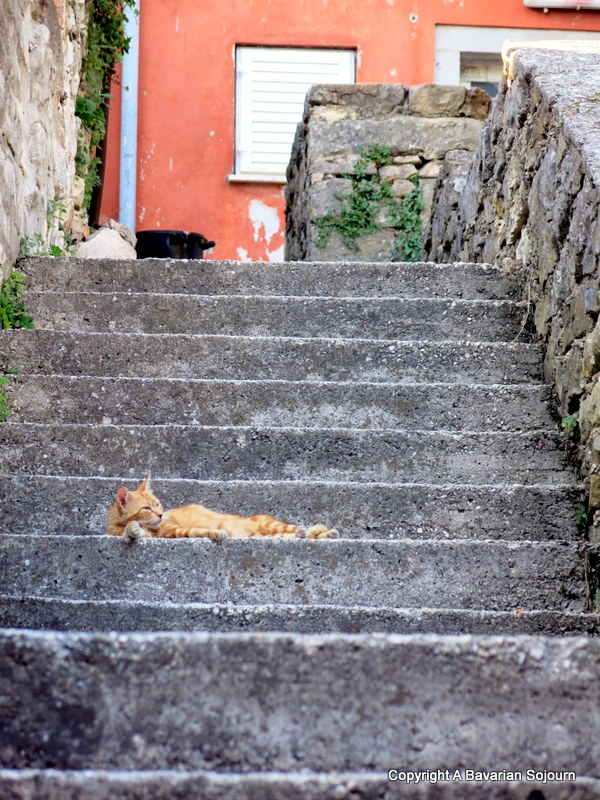 cats in Labin