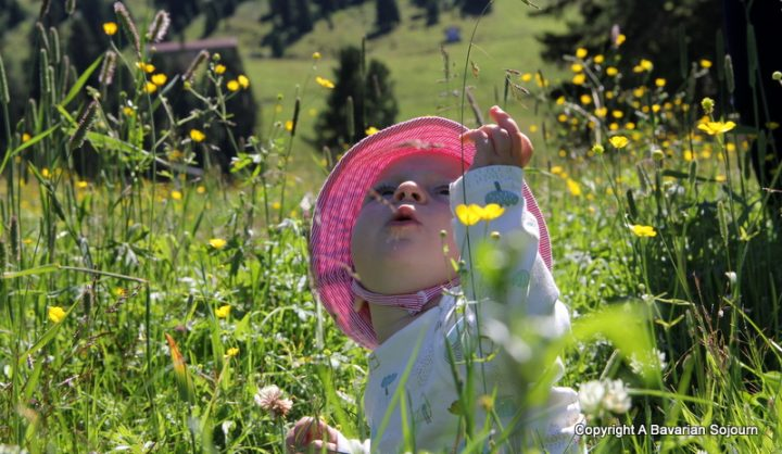 Buttercups everywhere, and no my hat isn't pink, it's red and white stripes!!