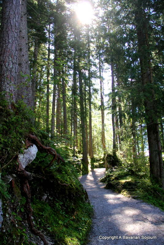 Eibsee Forest