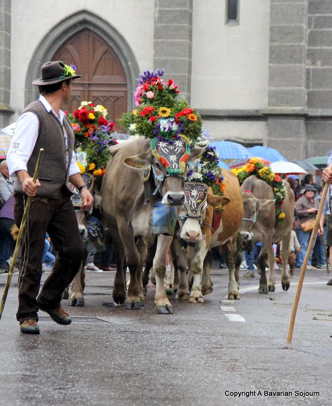cows almabtrieb