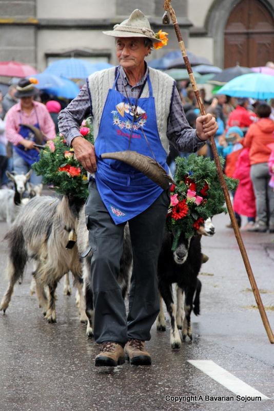 goats almabtrieb
