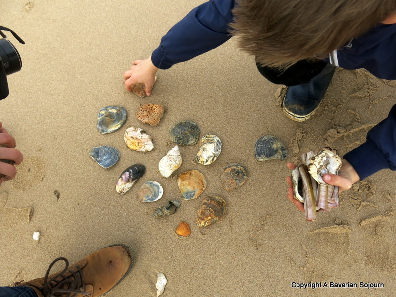 the shell collectors