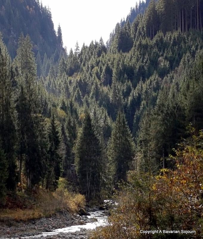 smaragd weg forest