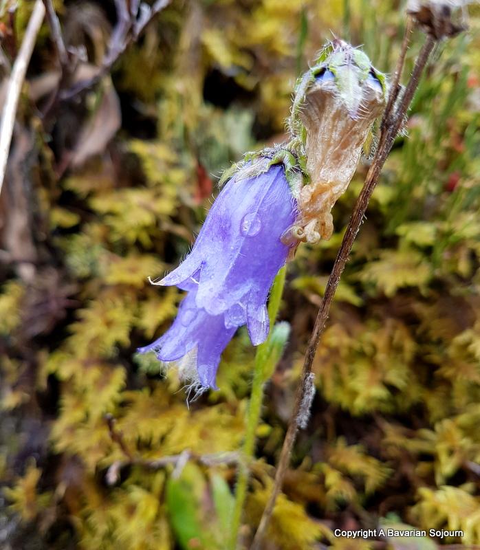 flower enzianhutte