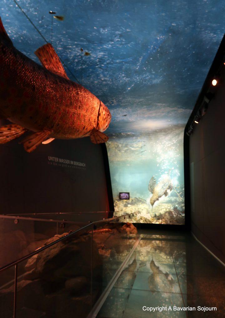 Nationalparkwelten Museum – Mittersill Austria