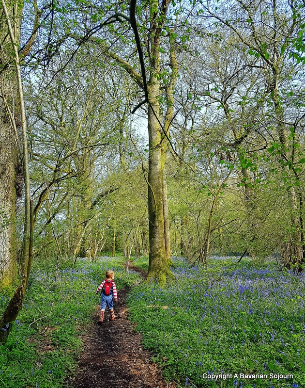 Sunday Photo – Sunday Morning Bluebell Inspecting