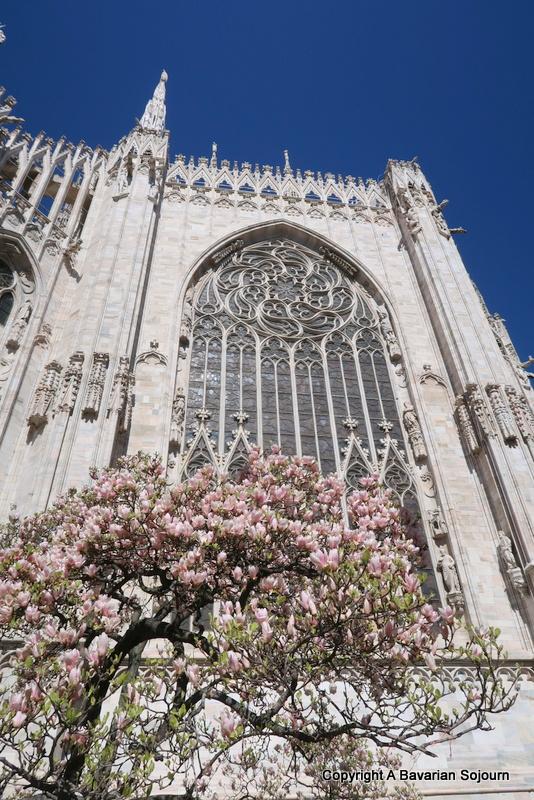 blossom at the Duomo Milan