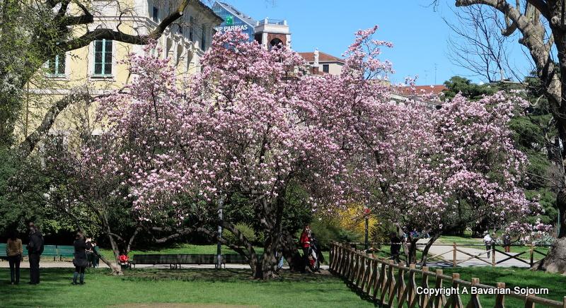 blossom trees giardini pubblici milan