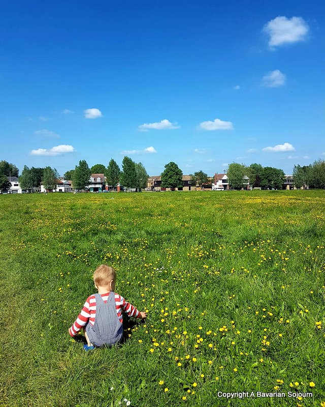 Sunday Photo – Buttercups Midsummer Common
