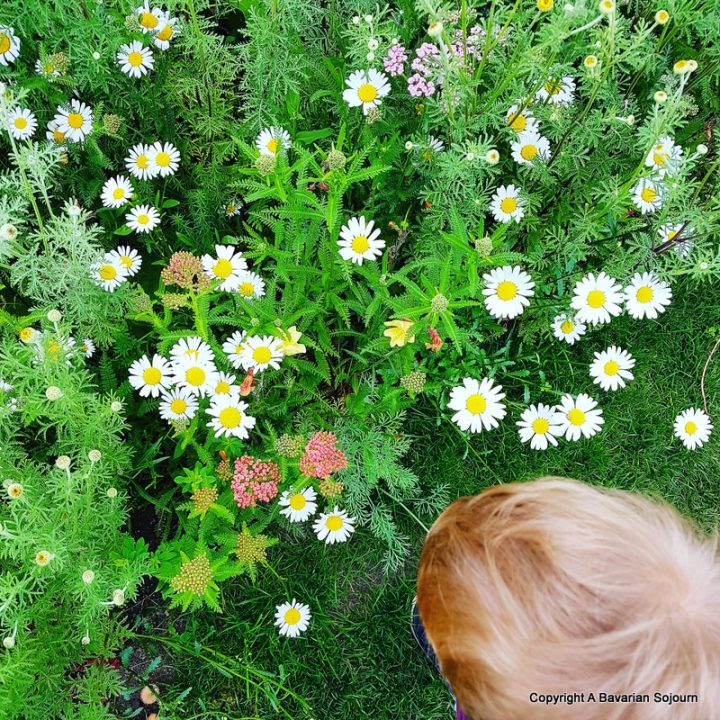 Sunday Photo – Wild Flowers Cambridge