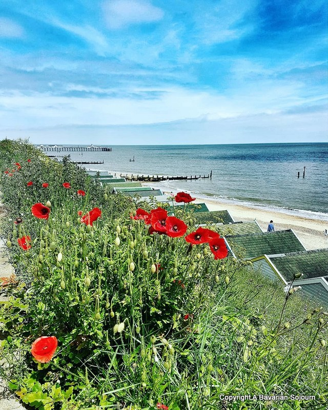Sunday Photo – Seaside Poppies