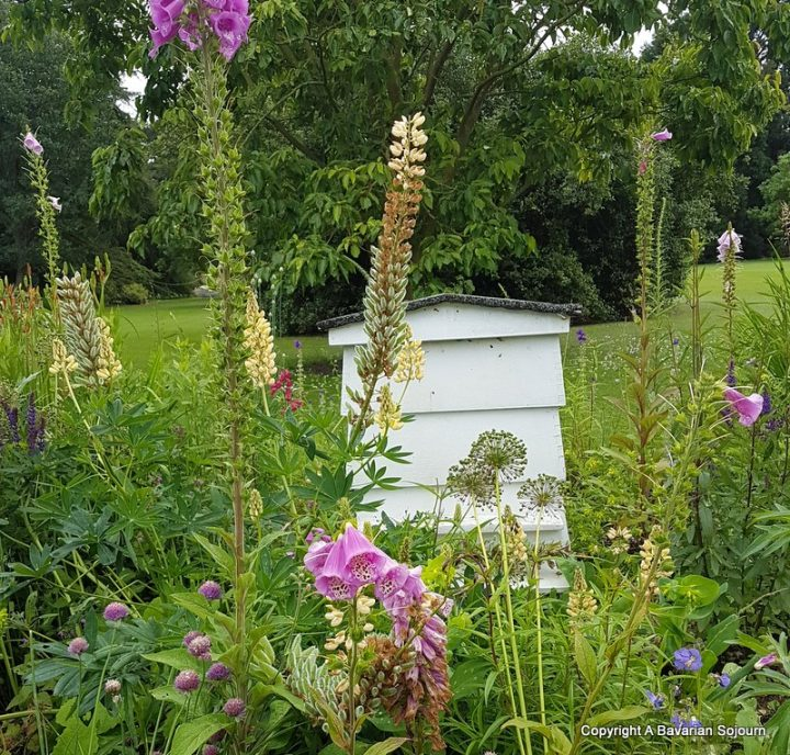 beehive cambridge botanical gardens