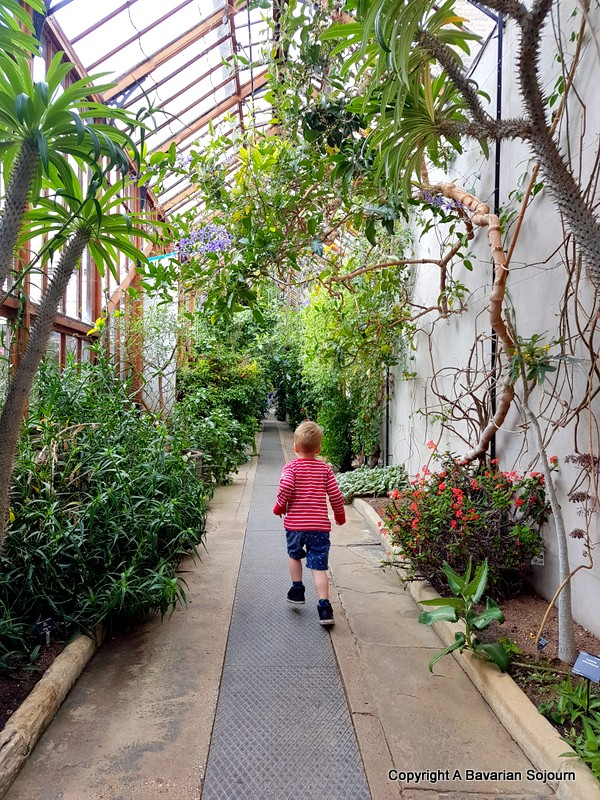 glasshouses cambridge botanical gardens