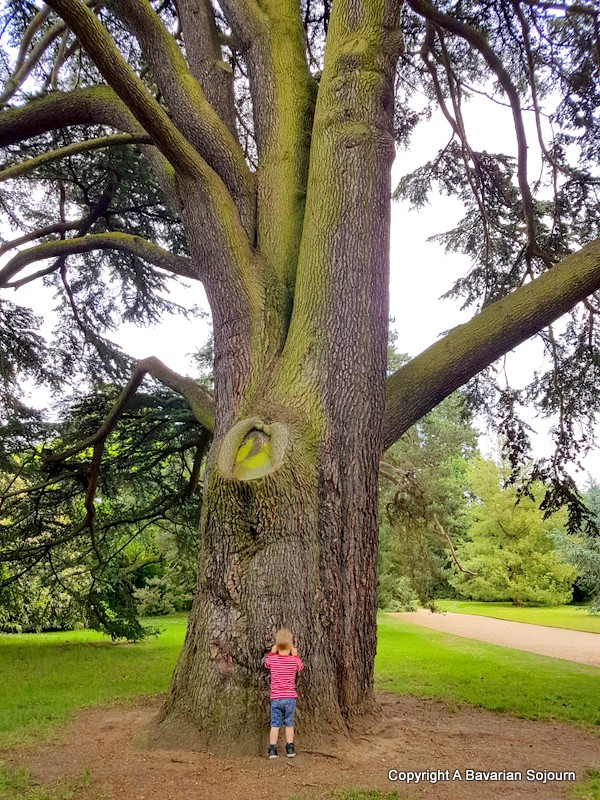 giant tree, tiny boy cambridge botanical gardens