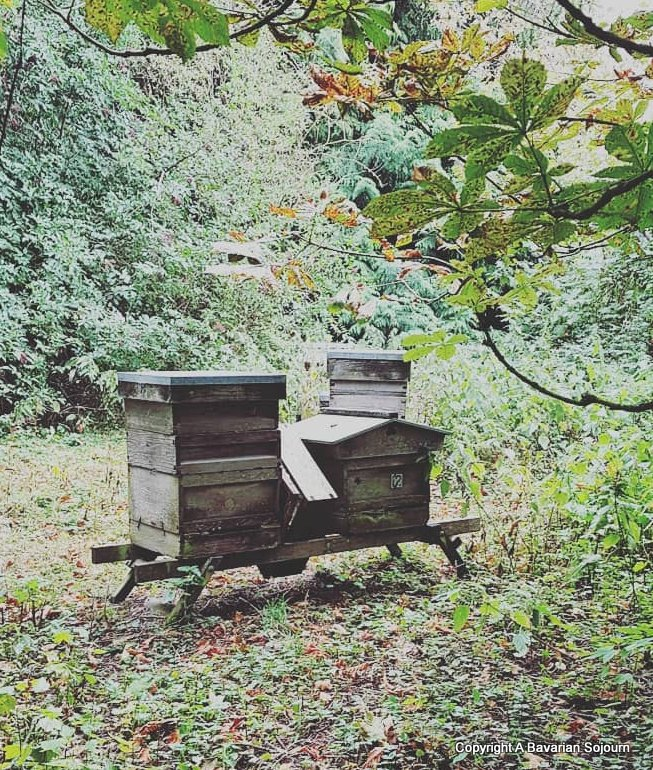 lainston beehives