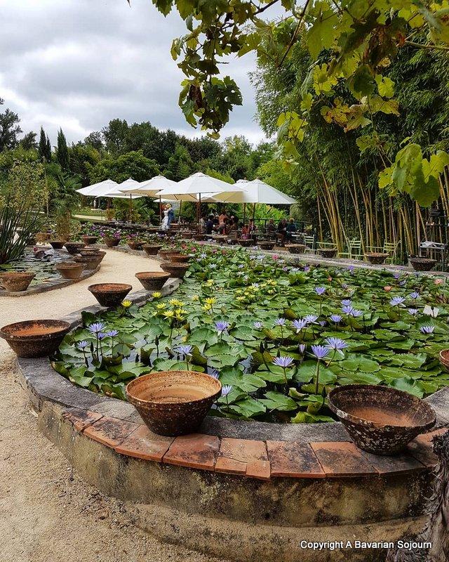 Latour Marliac Waterlily Gardens