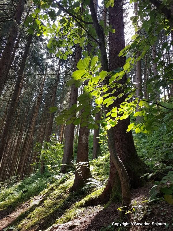 wald und wasser - castle wolfsthurn