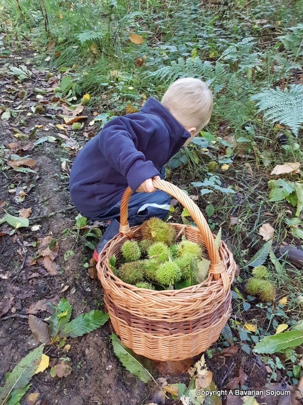 the sweet chestnut collector