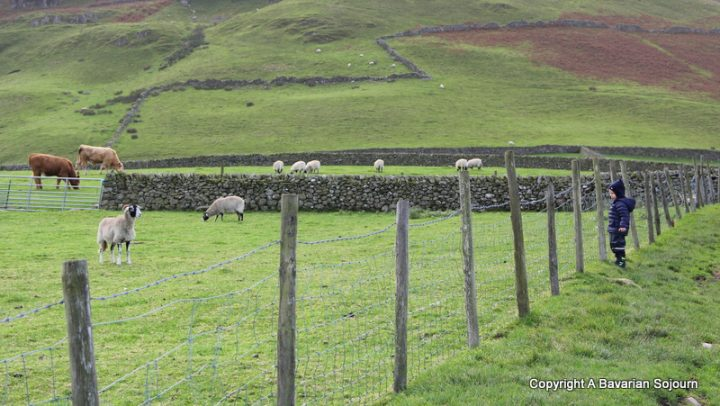 sheep conversations lake district