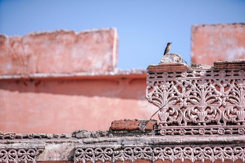 Pink Walls India