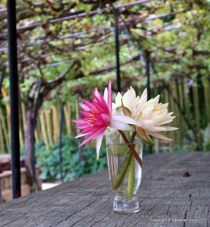 lilies latour marliac