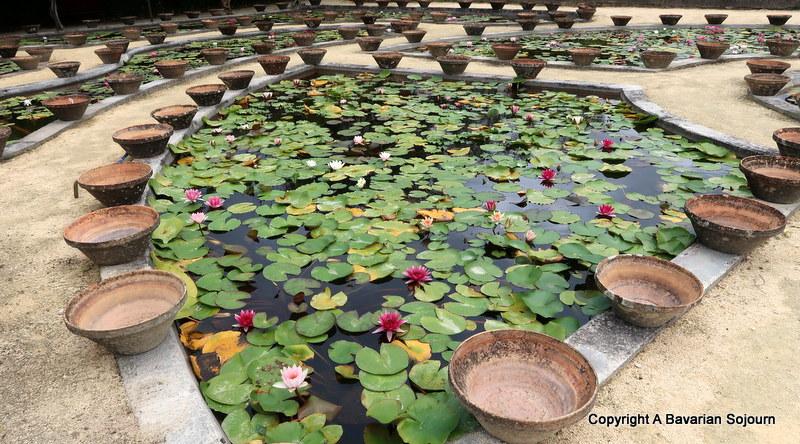 waterlily bowls latour marliac