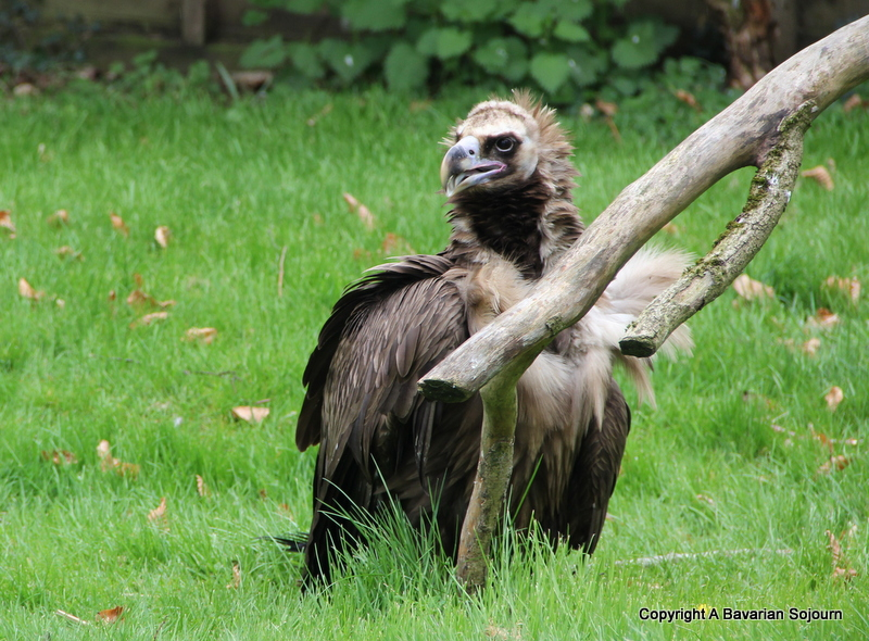 Vulture Hawk Conservancy