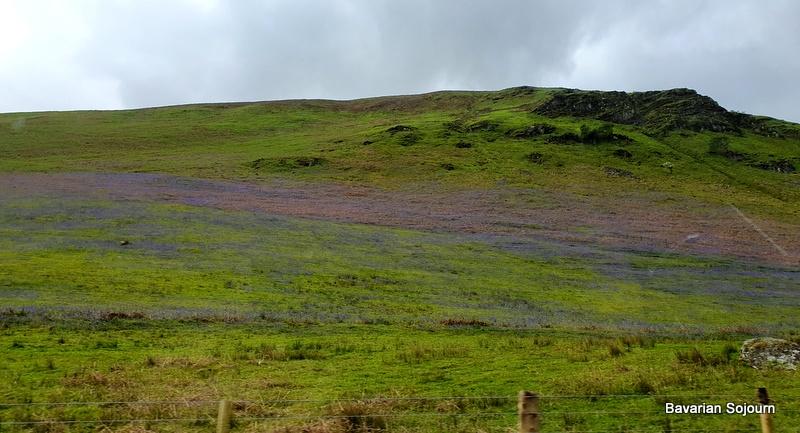 bluebells snowdonia