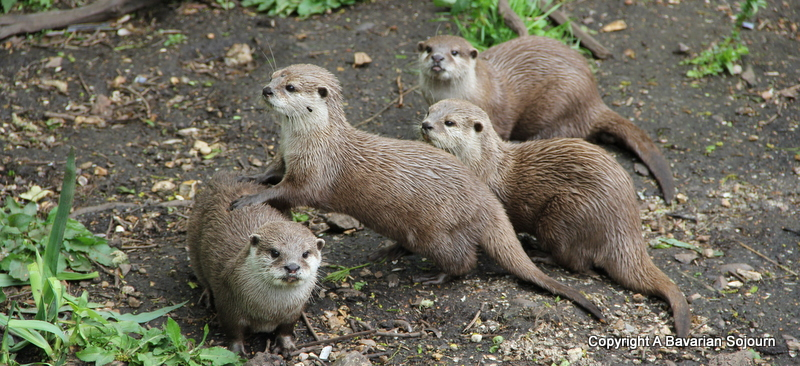 Otters Marwell