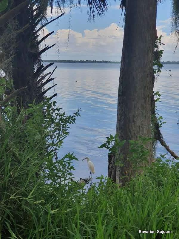 egret at Lake Hancock