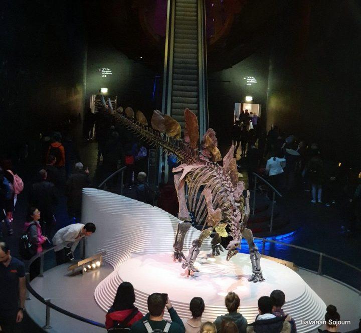 stegosaurus bones natural history museum