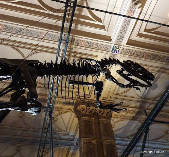 dinosaur bones natural history museum
