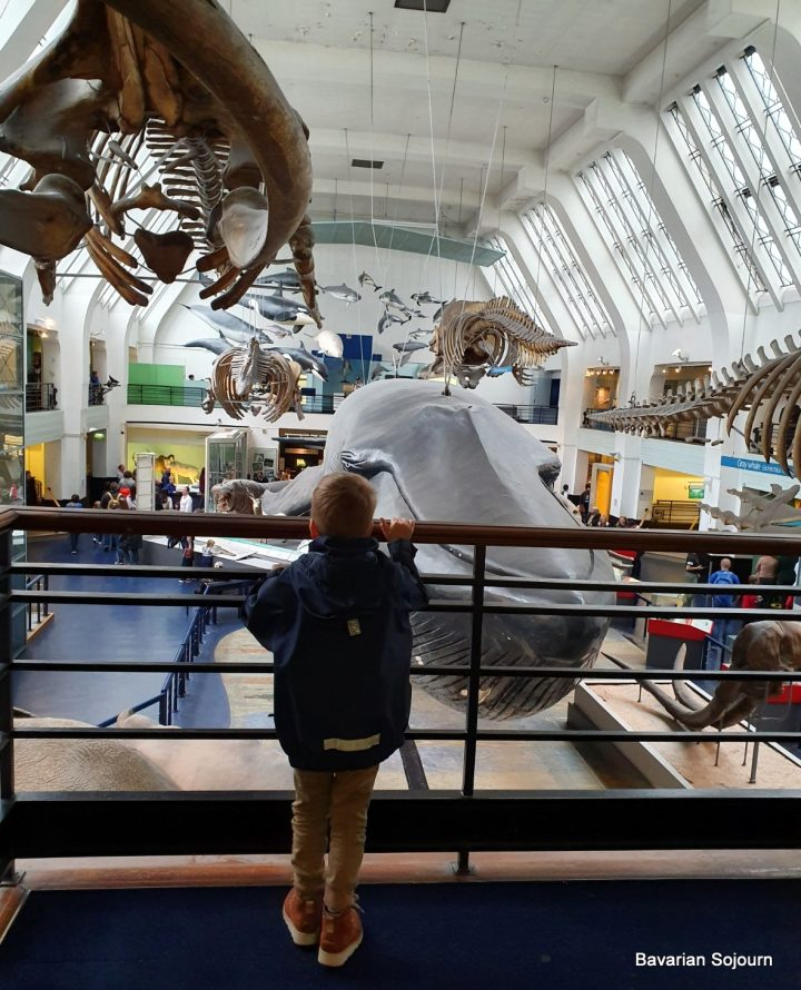whale hall natural history museum