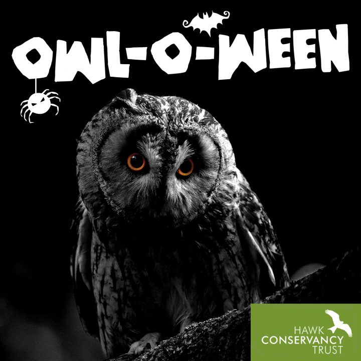 owloween - halloween at the Hawk Conservancy Trust