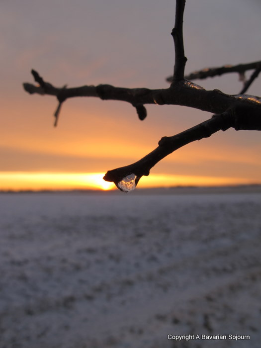 Sunday Photo – Frozen Dew Drop