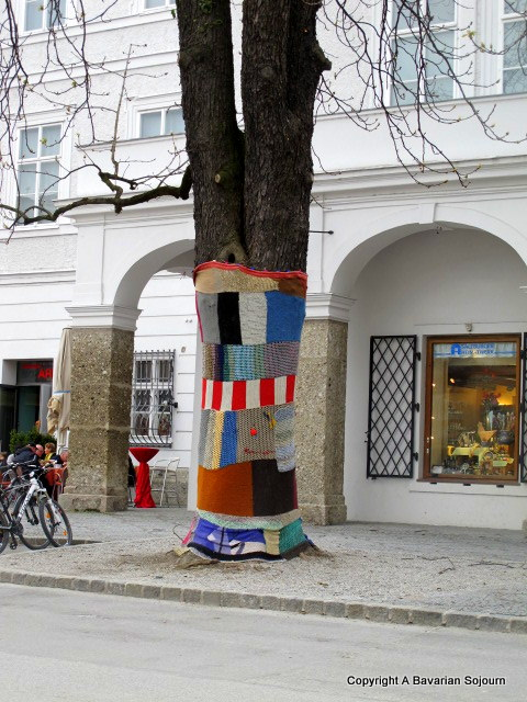 Sunday Photo – Test Card Tree – Salzburg