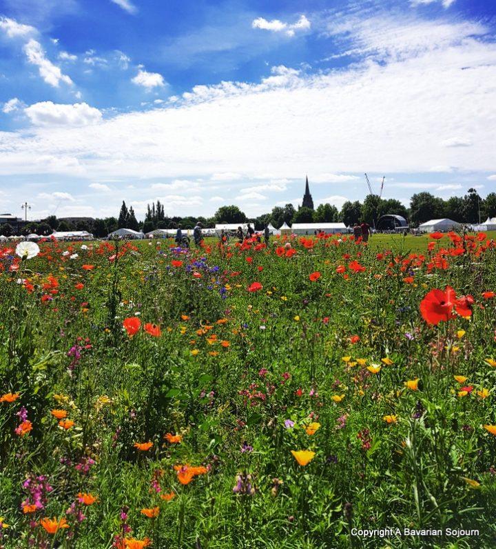 Sunday Photo – City Wildflowers